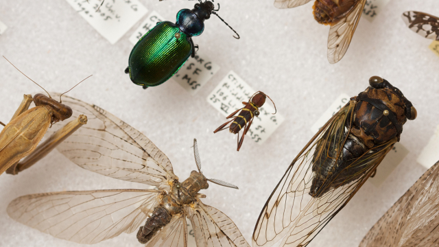 Insect specimens