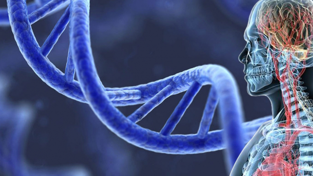 Artist's rendering of human body and large-scale DNA molecule.
