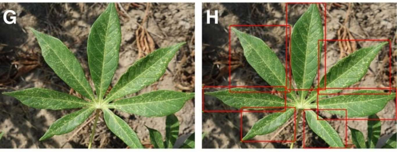 Mobile-Based Machine Learning to Identify Plant Diseases