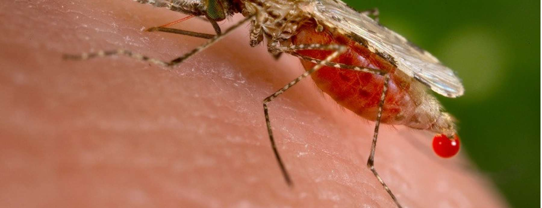 Control strategy for Dengue, malaria increases risk of West Nile virus